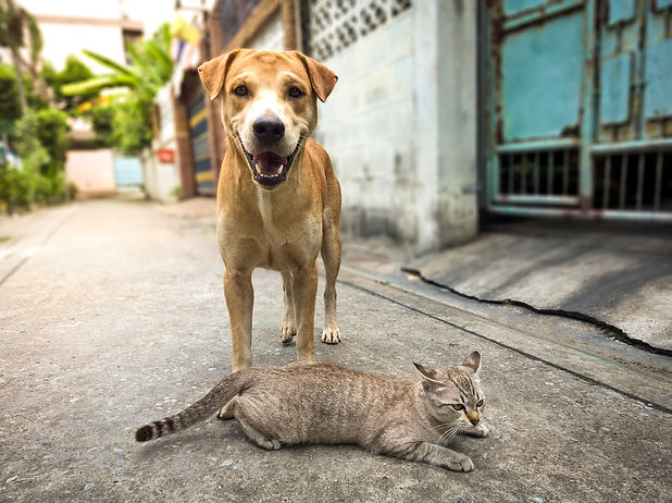 Cat and dog friend forever.jpg