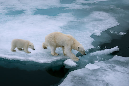 high angle of mother polar bear and cub