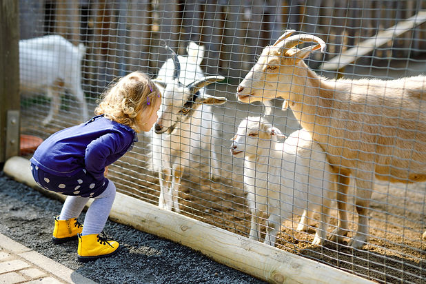 Adorable cute toddler girl feeding littl
