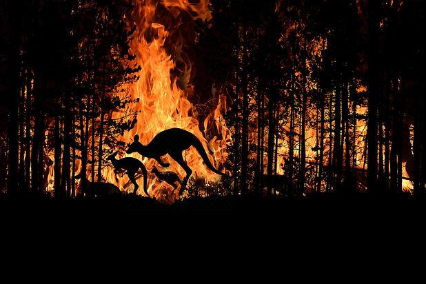 Bushfire IN Australia Forest Many Kangar