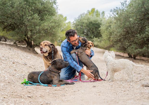 Professional dog walker or pet sitter wi