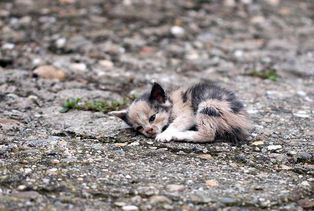 abandoned kitten lying on the ground .jp