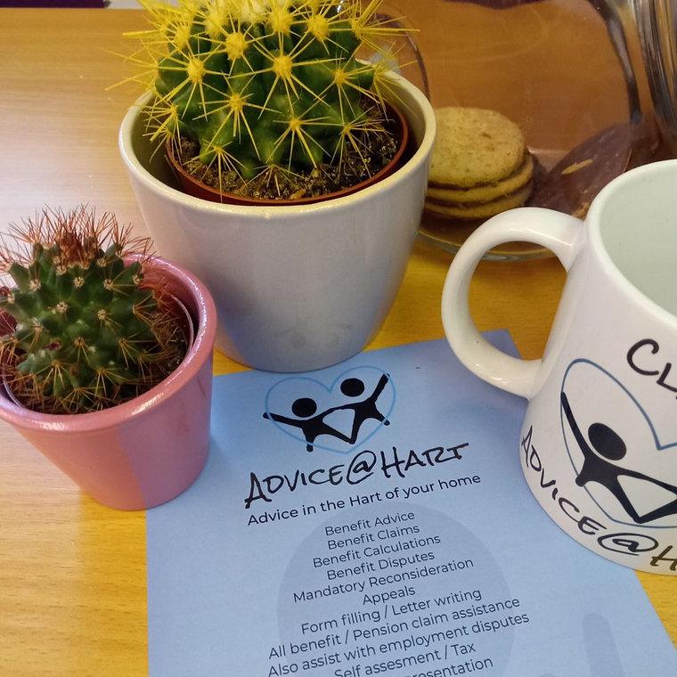 cactuses.jpg