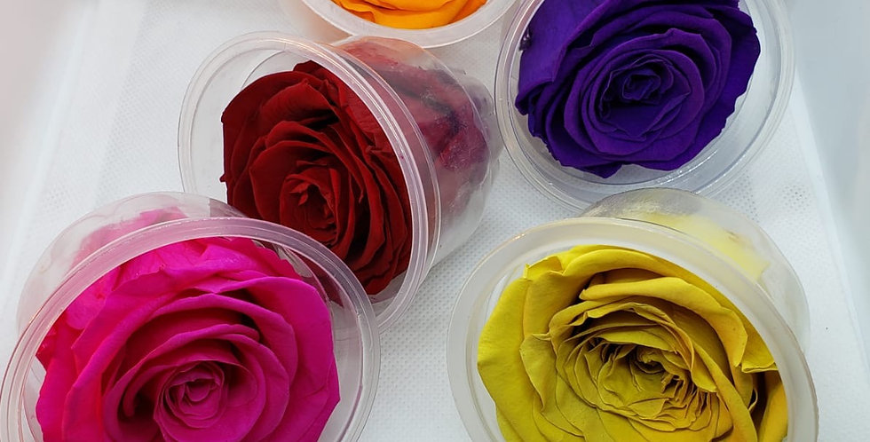 Rosa Eterna 5 cm