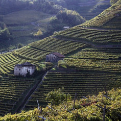 trentino alto adige-vino-villacorniole-v