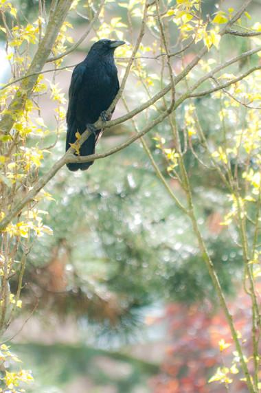 Dans un jardin à Uccle © Luc Teper
