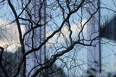 Un arbuste à Uccle © Luc Teper