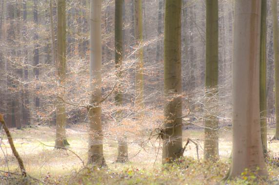 La Forêt de Soignes à Watermael-Boisfort © Luc Teper