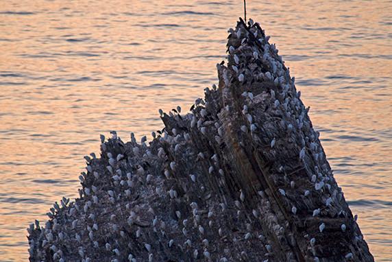 Rocher servant de dortoir aux oiseaux à Zambujeira do Mar ©Luc Teper