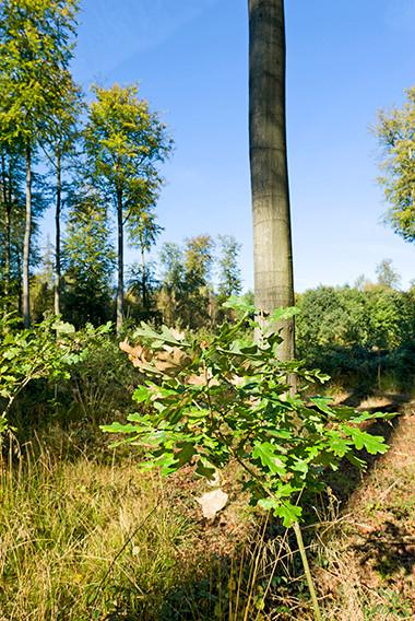 La Forêt de Soignes à Uccle © Luc Teper