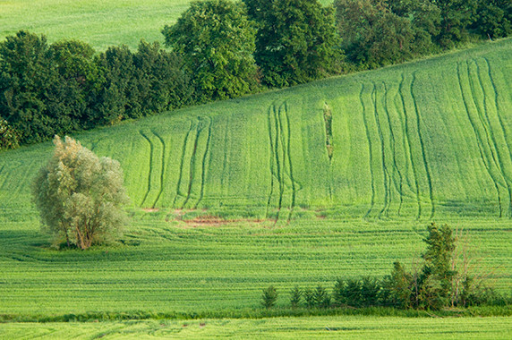 Dans la campagne de Valiano © Luc Teper