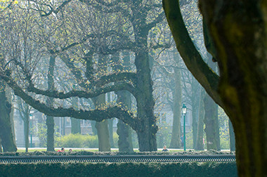 Le Parc du Cinquantenaire © Luc Teper