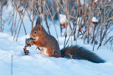 Un écureuil dans le Parc de Forest © Luc Teper