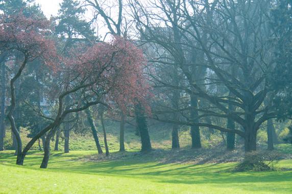 Le Parc de Forest © Luc Teper