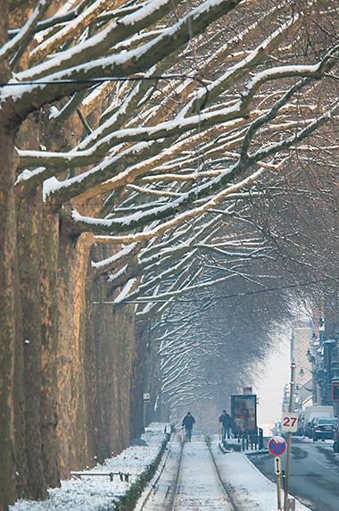 Platanes de l'Avenue Van Volxem à Forest © Luc Teper