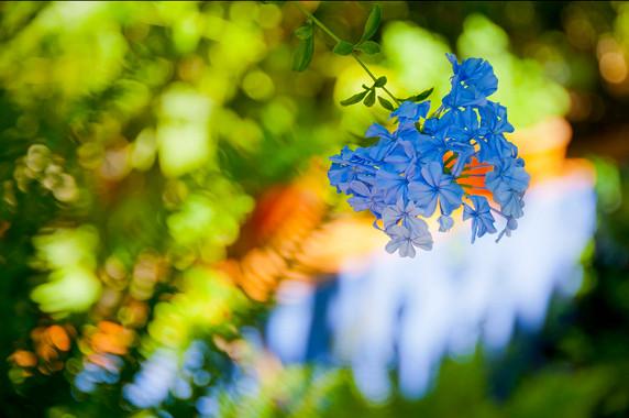 Dans un jardin d'Amadora © Luc Teper