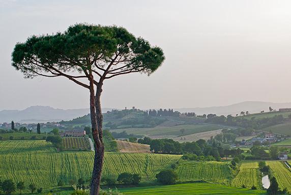 Près de Montepulciano © Luc Teper
