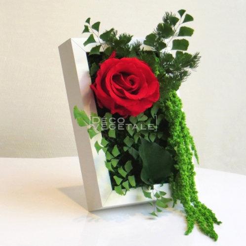 Sweet Star (Rose - rot)