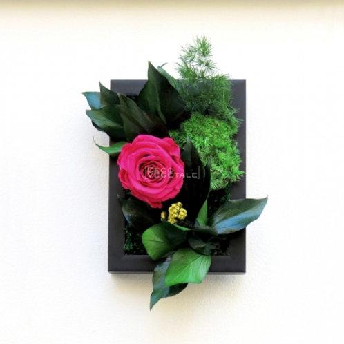 Sweet Rose (Rose - fuchsia)