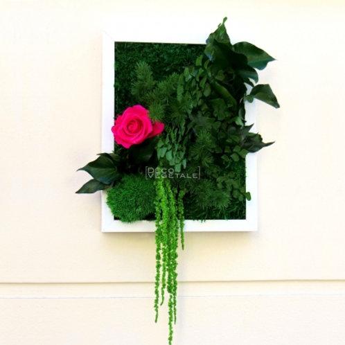 Palada (E) - Rose fuchsia