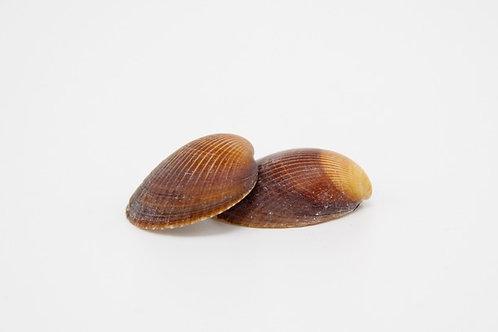 Muscheln (braun)