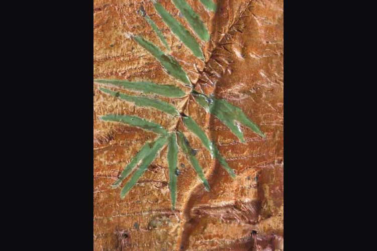 bark collage (detail)