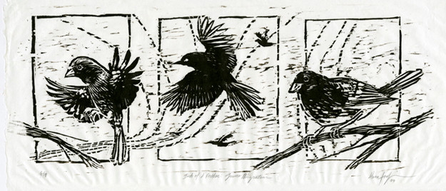 Birds of a Feather: Junco Migration