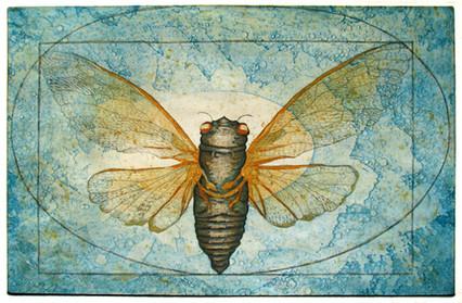 The Vitruvian Cicada