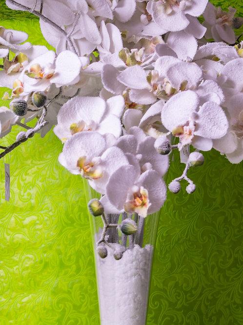 Ramo orchidea innevata