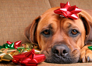 What NOT To Feed Your Pet This Holiday Season