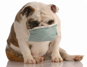 Kennel Cough: Protecting Your Pooch