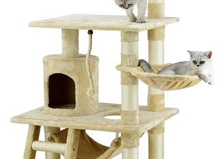 Top 5 Gifts for Your Indoor Cat