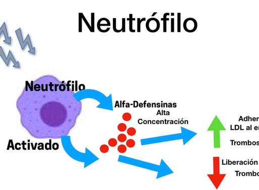 Las alfa Defensina y su relación con infarto y el COVID-19