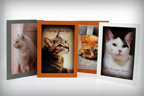 Cat Sympathy Cards Assorted   ( Set of 4 )