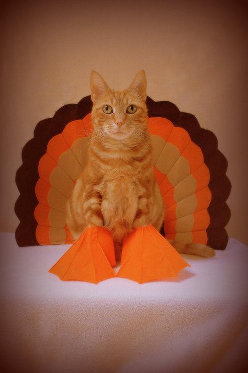 Thanksgiving Card (set of 5)