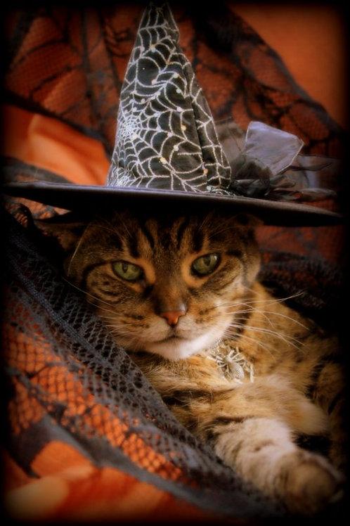 Halloween assorted (set of 5)