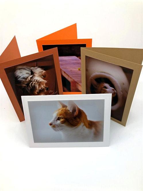Pet Sympathy Cards Assorted (Set of 4)