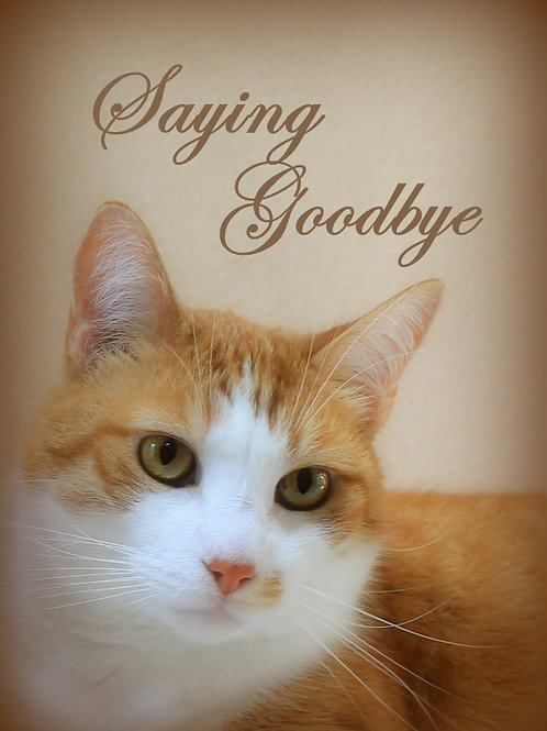 Cat Sympathy Cards Assorted (set of 3)