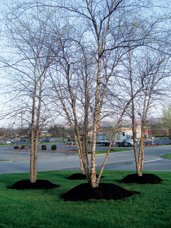 Landscaping-Christiansburg-VA-4.jpg