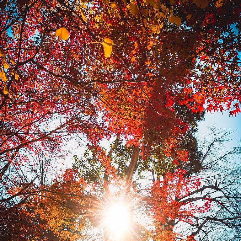 Retraite de pleine conscience d'automne