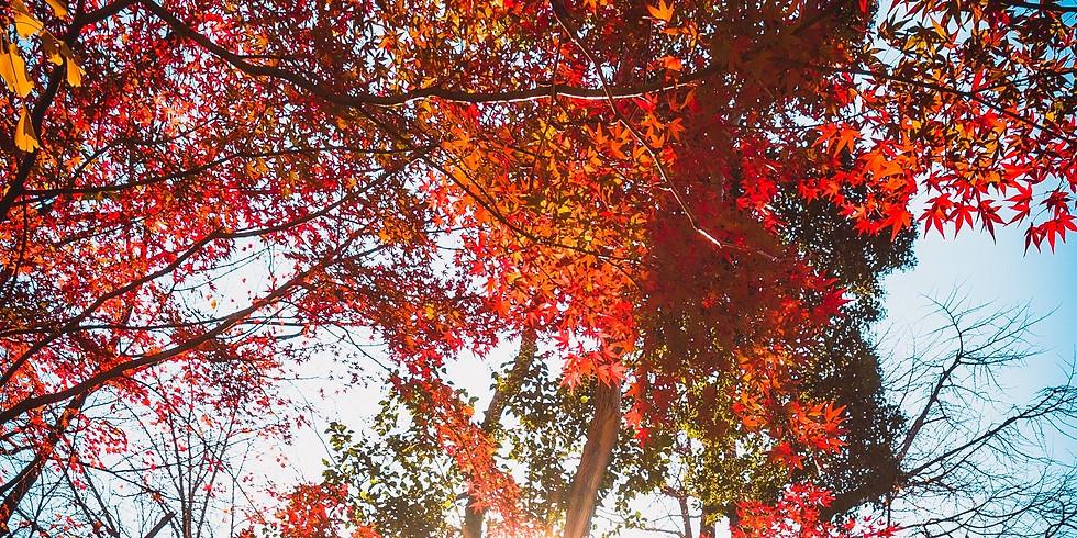 Retraite d'automne : les outils de la pleine conscience