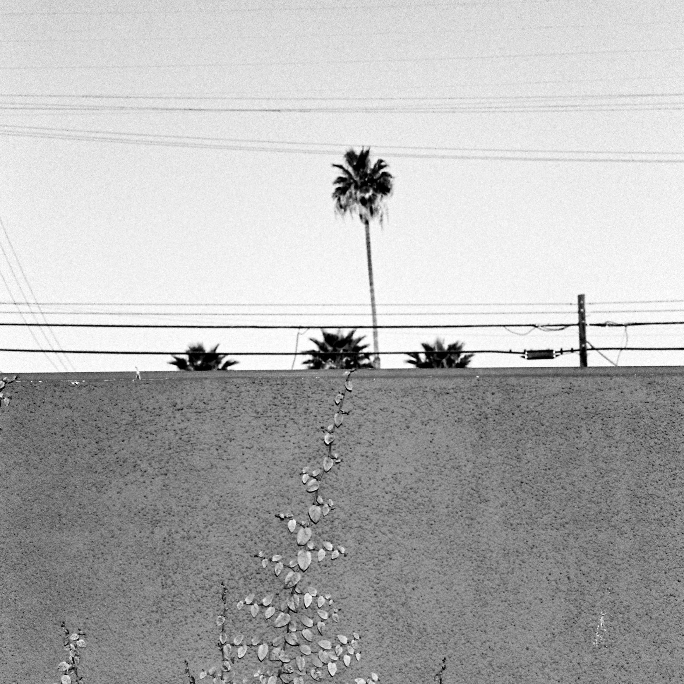 LA CALIFORNIE 50
