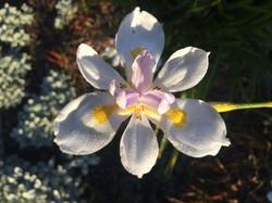 flower pic