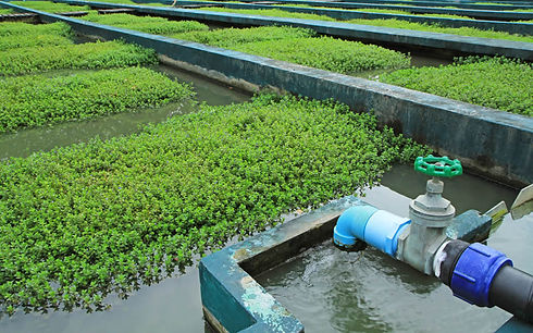 Agricultural water purification pic.jpg