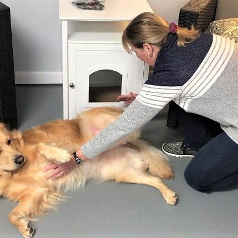 Reiki for Animal Wellness - Online info and talkback session