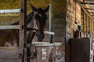 horse-2109046_1920.jpg