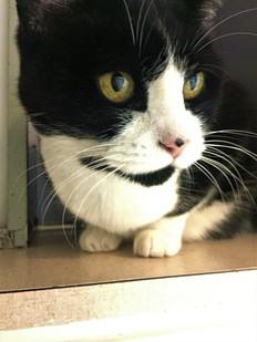 Cat Boarder