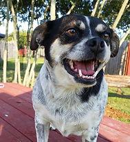 Freckles: Dog boarder