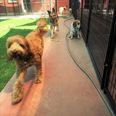 Dog Boarders