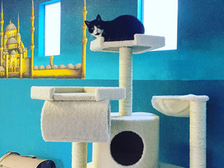 Kingdom of Cats: Newly donated cat trees create palace for boarding cats